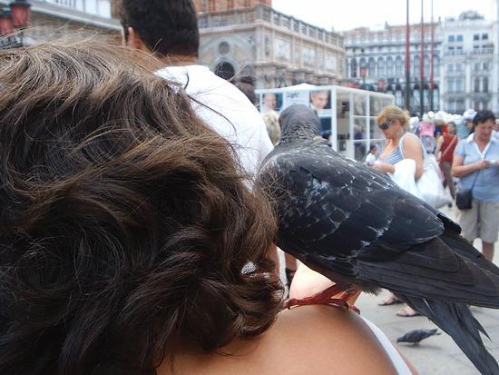 Che bello il mondo a qua giù! - Venezia (1358 clic)