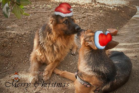 Buon Natale e buone feste  - Termini imerese (899 clic)