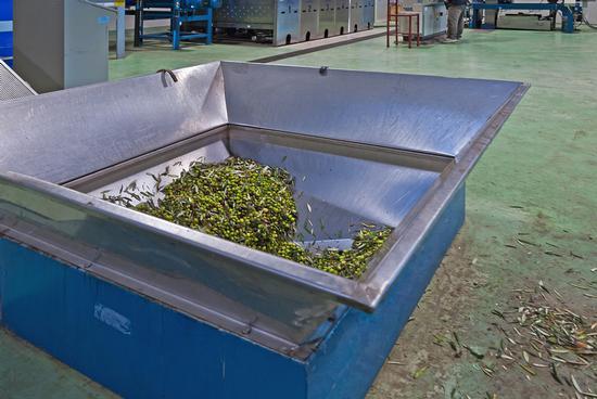 Il Mulino olive - Caccamo (2620 clic)