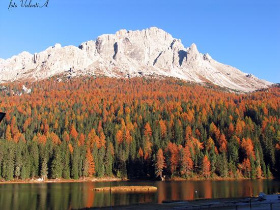 Foresta sul lago - Misurina (3982 clic)