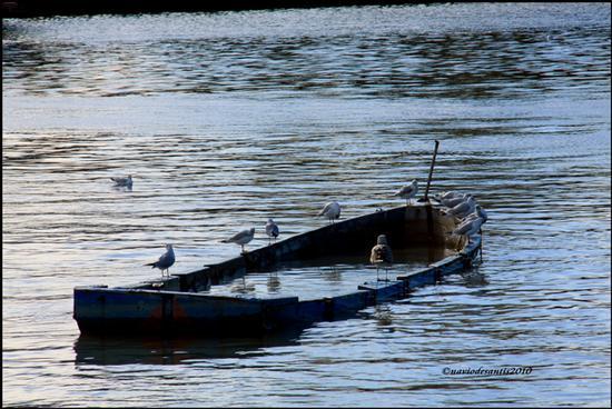 SI SALVI CHI PUO' - Pescara (2205 clic)