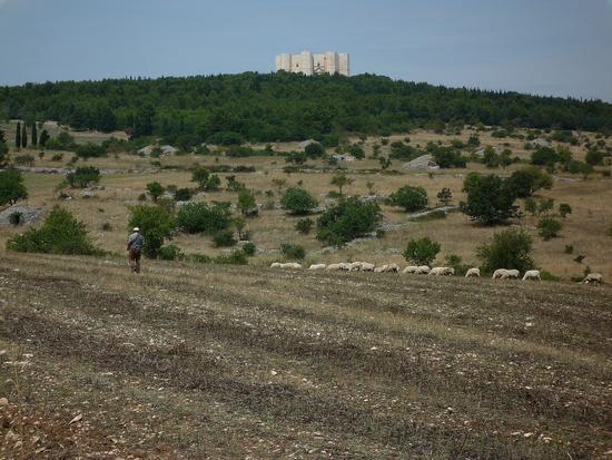 Pastore con Castello - Castel del monte (2764 clic)