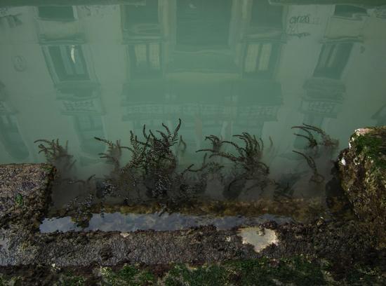 Alghe nel canale - Venezia (871 clic)