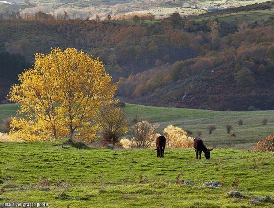 - Floresta (2539 clic)