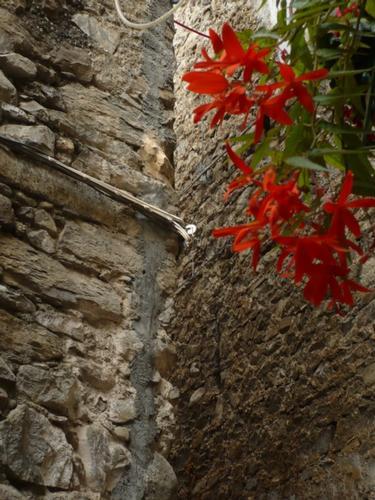 Scorcio centro storico  - Rocchetta nervina (2050 clic)