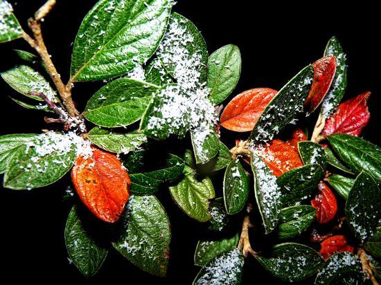 Cristalli di neve - La spezia (2302 clic)