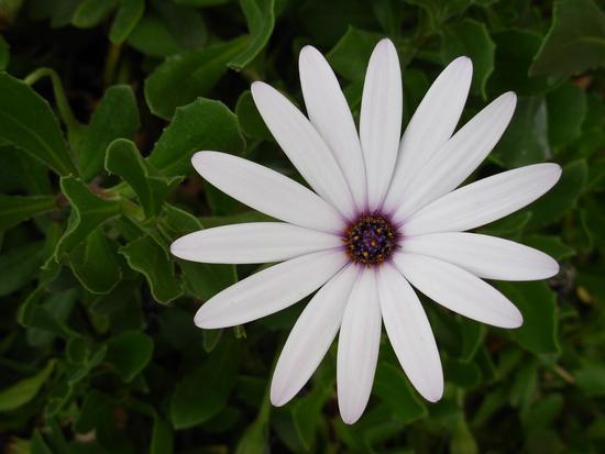 elene - OLBIA - inserita il 08-Jan-11