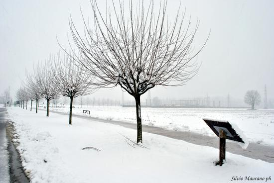 Neve urbana - Figino serenza (1059 clic)
