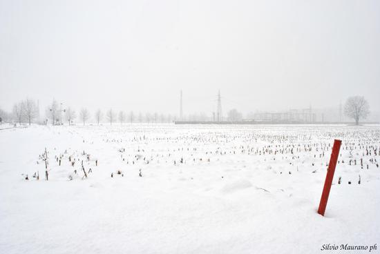 Neve - Figino serenza (1210 clic)
