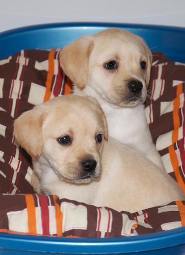 I miei cuccioli - Misterbianco (2446 clic)