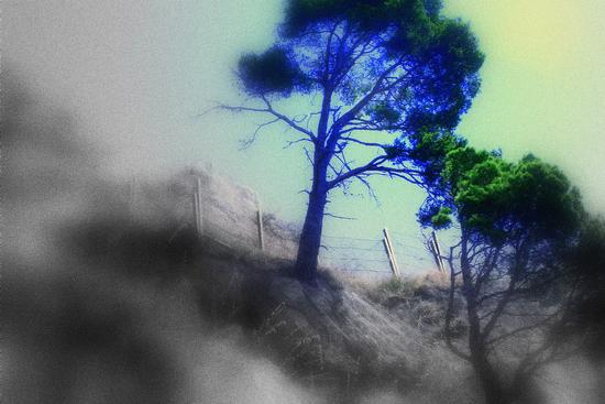 quattro stagioni - Amalfi (2480 clic)