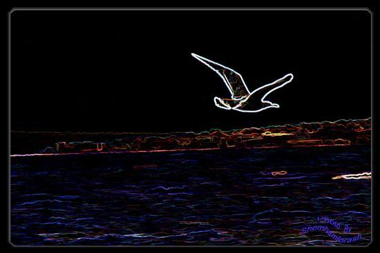 l'albatros - Castellammare di stabia (2203 clic)