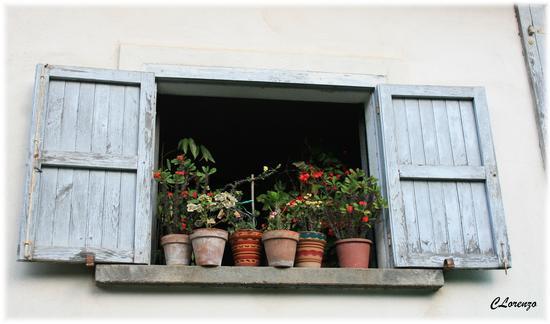 finestra fiorita - Serra san bruno (2041 clic)