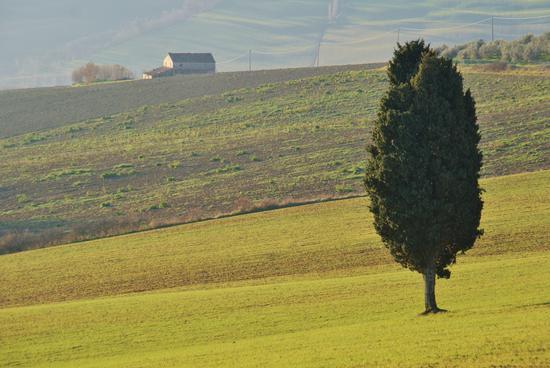 San Costanzo,la campagna (1443 clic)