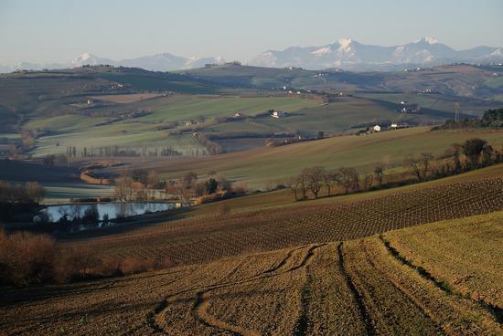 Panorama con il gruppo del Monte Catria sullo sfondo - San costanzo (1595 clic)