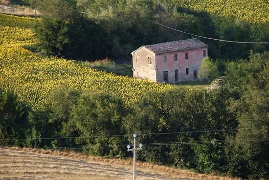 Cerasa di San Costanzo-PU La casa rosa (1152 clic)
