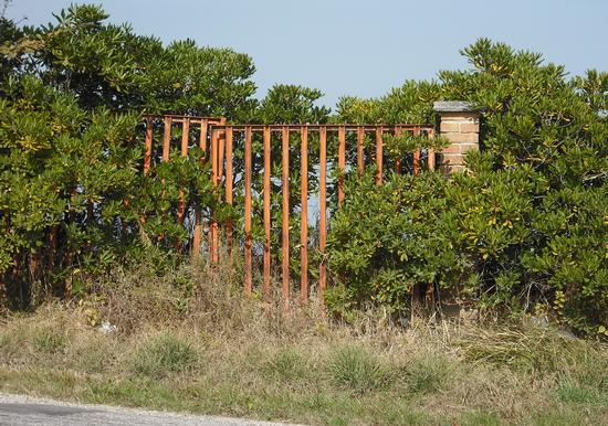Cancello..abbandonato - San costanzo (1375 clic)