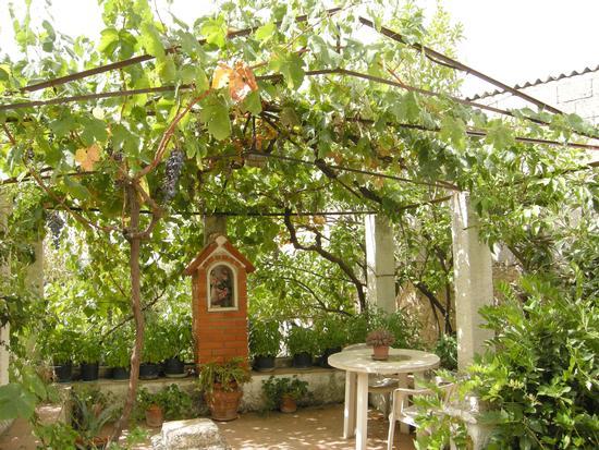 Bolotana - Il giardino di una casa padronale (521 clic)