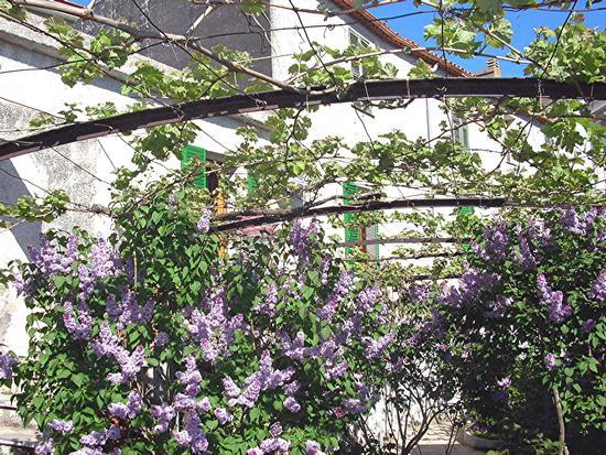 Bolotana - Giardino e casa padronale  (498 clic)