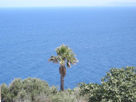 Palmizio sul mare - Castelsardo (2794 clic)