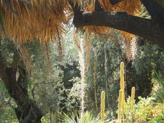piante esotiche a Villa Hambury - Ventimiglia (2261 clic)