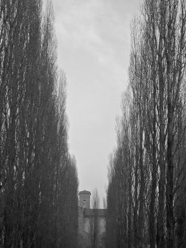 dolce inverno ferrarese - Ferrara (1673 clic)