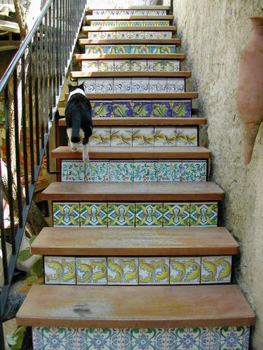 Gatto sulle scale - Erice (3065 clic)