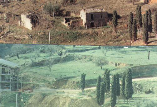 cipressi - Assoro (2104 clic)