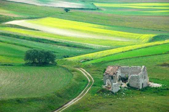 FIORITURA A PIAN GRANDE - Castelluccio (4447 clic)