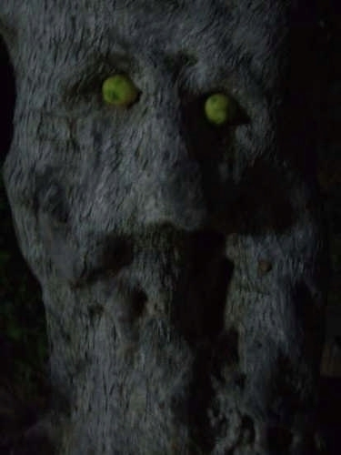albero di ulivo 2 - Pettineo (3610 clic)