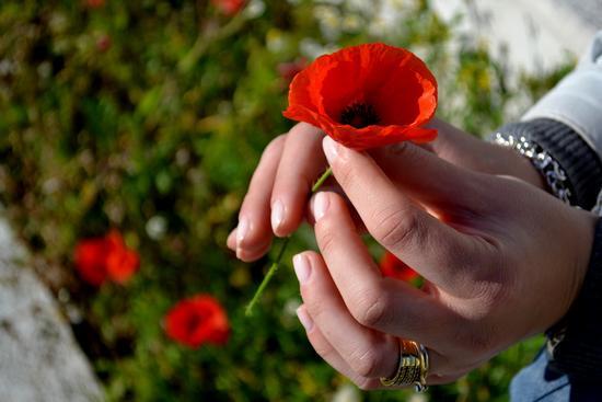 Mani di donna - Reggio calabria (4168 clic)