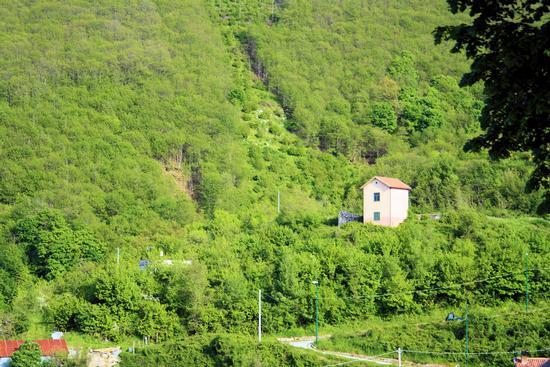 Il verde di San Domenico Chiusano S. D.(AV) - AVELLINO - inserita il 07-Mar-11