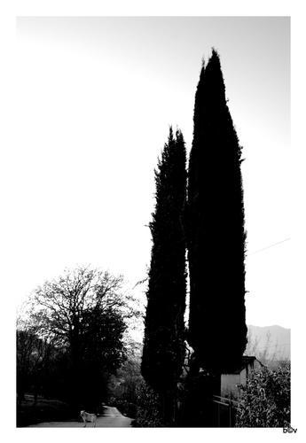 Via provinciale Cerzete - Atripalda (AV) (1526 clic)