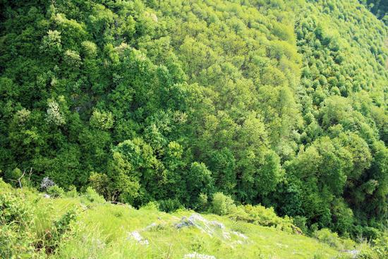 il verde di Chiusano S. D.(AV) 2 - Avellino (2464 clic)