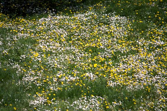 Spring time 1 - Atripalda (1789 clic)