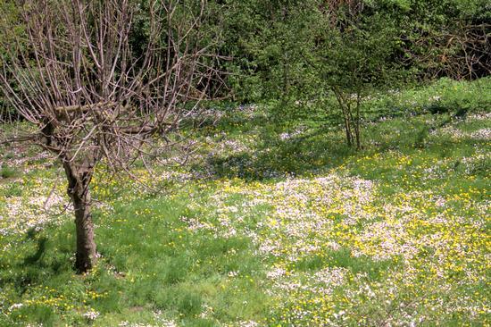 Spring time 2 - ATRIPALDA - inserita il 13-Apr-12