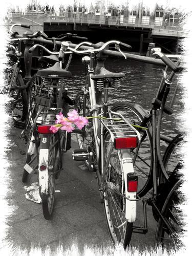 Bici con fiore - Taranto (1465 clic)