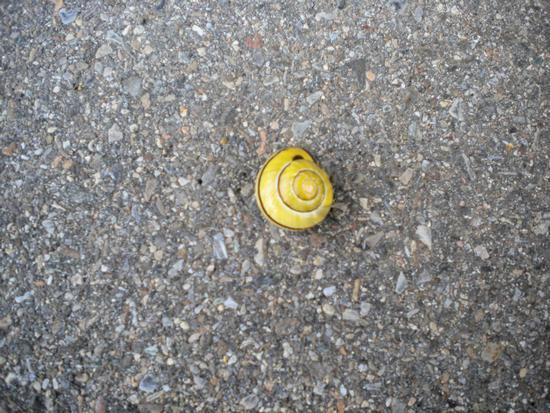 Lumaca sull'asfalto - ATRIPALDA - inserita il 06-Jun-11