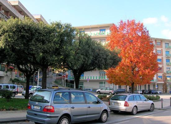 Colori d'autunno - ATRIPALDA - inserita il 28-Nov-11