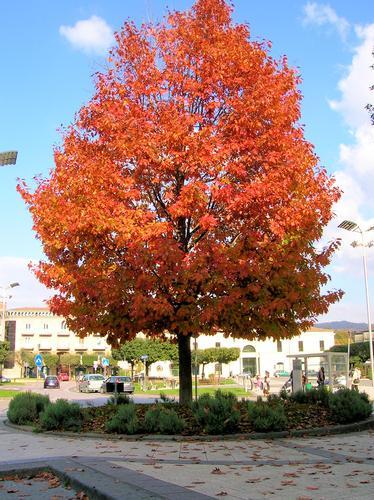 Cominciano a cadere le foglie - Atripalda (2220 clic)