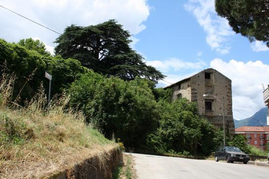Prurisecolare Cedro del Libano presso Palazzo Ducale. Atripalda - ATRIPALDA - inserita il 05-Mar-11
