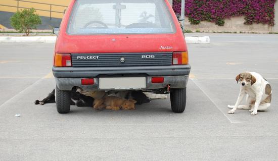 Vita da cani...!! (1430 clic)