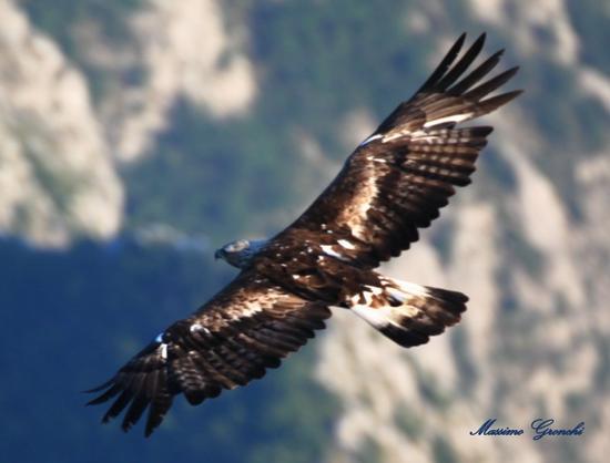 Libertà.....Reale  - Vergemoli (1238 clic)