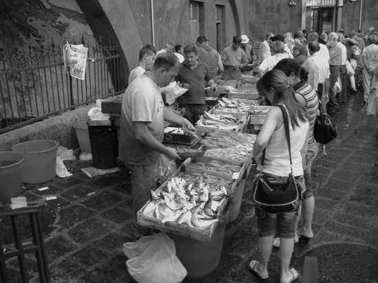 pescheria - Catania (3115 clic)