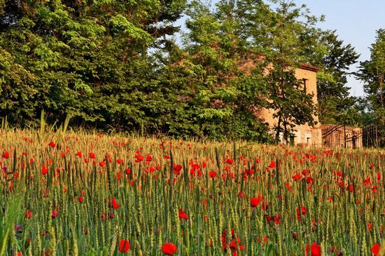 Paesaggio campestre - San potito sannitico (3246 clic)
