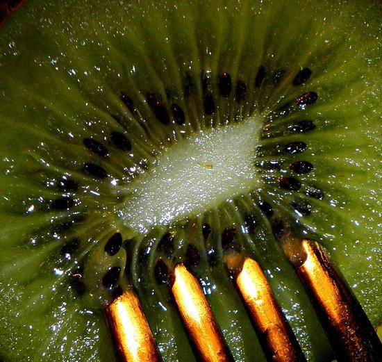 Kiwi - Fiano romano (2436 clic)