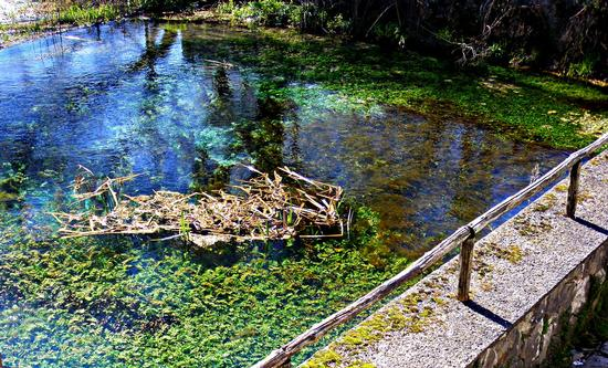 La Riserva Naturale - lago di Posta Fibreno (3386 clic)