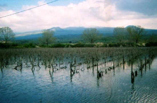 Lago Gurrida - Il Vigneto - Randazzo (7592 clic)