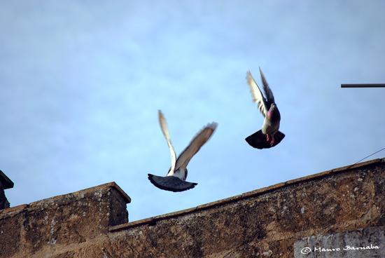 Pigeons' dance - Gravina in puglia (1618 clic)