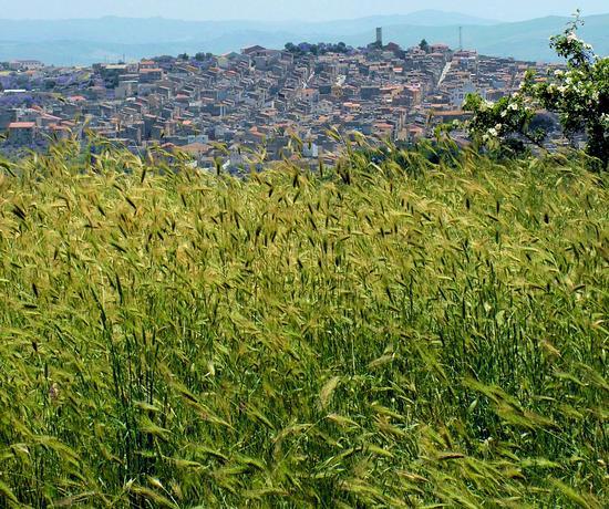 panorama lercara - Lercara friddi (2448 clic)